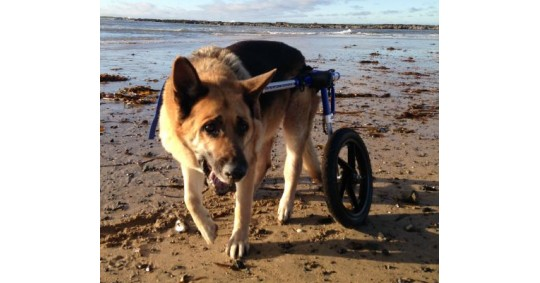 The Story Behind Wheels4Dogs