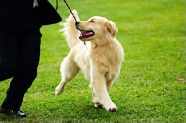 Hammersmith Dog Training Club