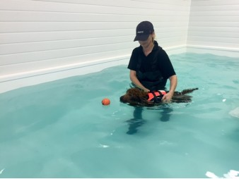 Genesis Canine Hydrotherapy Clinic