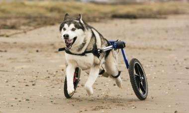 wheels4dogs