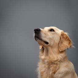Companion Dog Solutions