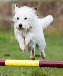 SIT Dog Training