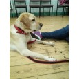 Paws On Dog Training
