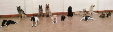 Puppy Prep School & Further Education for Dogs