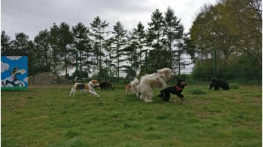 The Willow Tree Canine Daycare