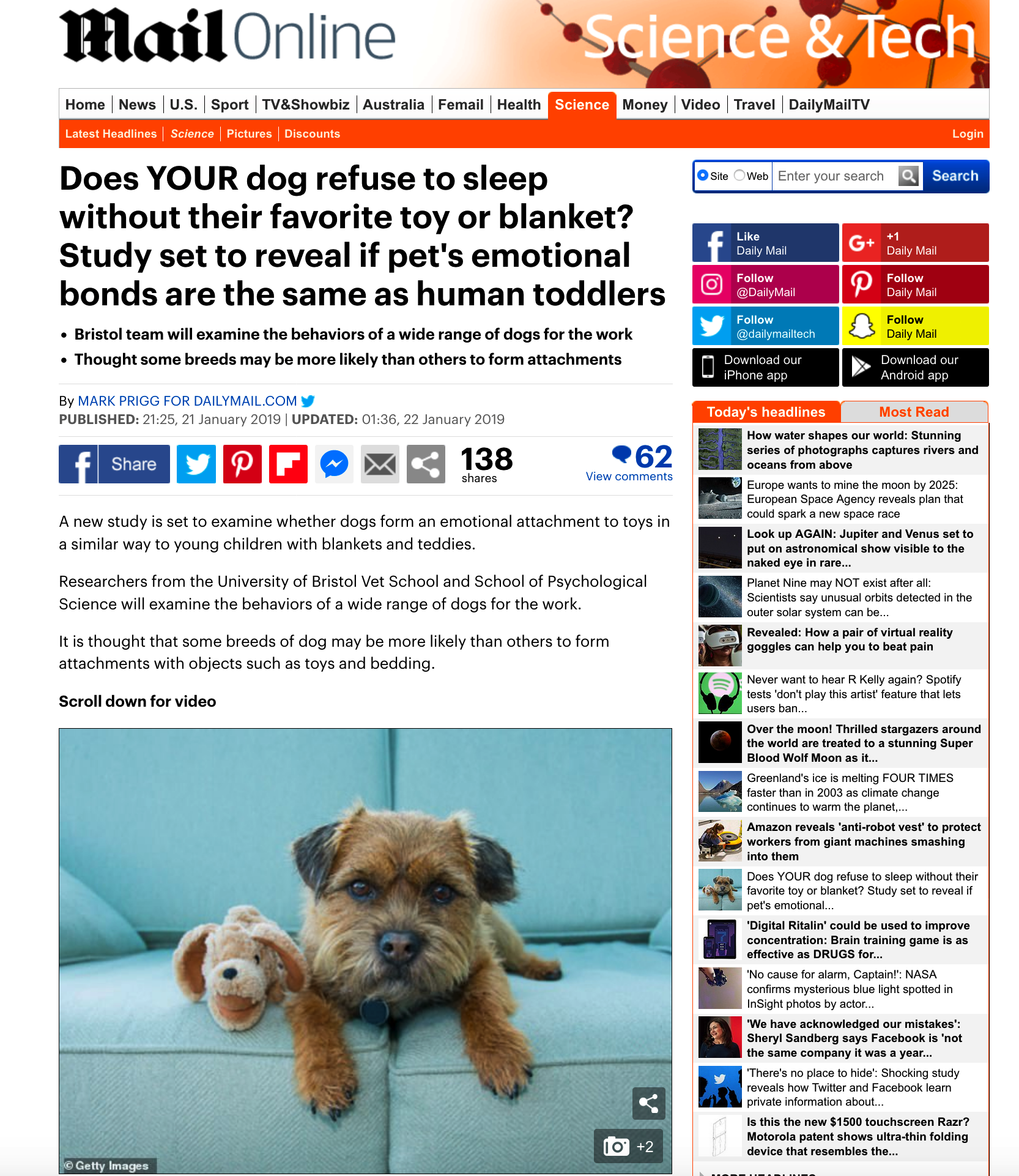 Does Your Dog Refuse To Sleep Without Their Favourite Toy?